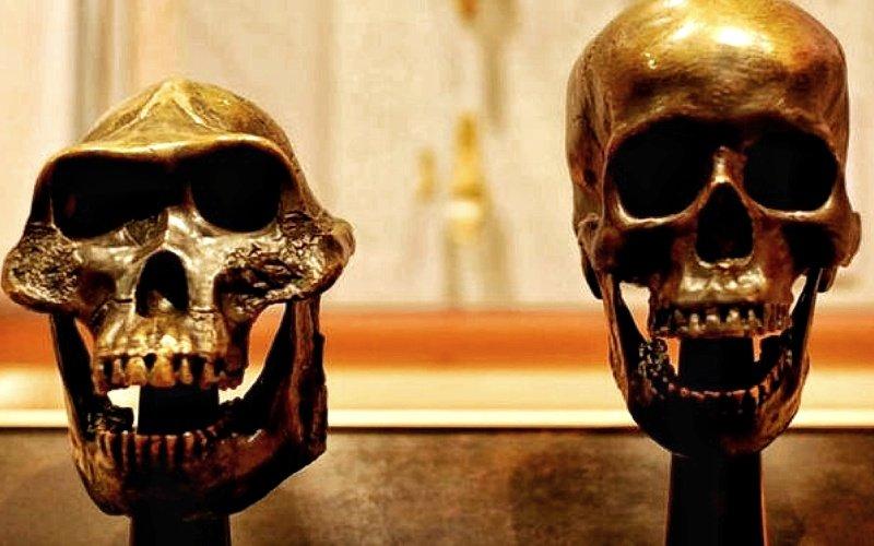 Crani
